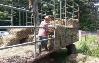 Young kid playing with hay on hay ride